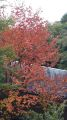 秋ちいさい.jpg